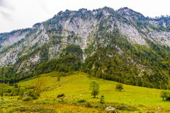 Pr? d'herbe dans Koenigssee, Konigsee, parc national de Berchtesgaden, Bavi?re, Allemagne photos stock