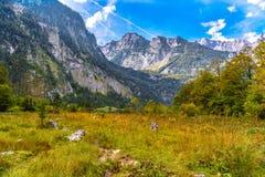 Pr? d'herbe dans Koenigssee, Konigsee, parc national de Berchtesgaden, Bavi?re, Allemagne photos libres de droits