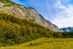 Pr? d'herbe dans Koenigssee, Konigsee, parc national de Berchtesgaden, Bavi?re, Allemagne image libre de droits