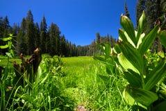 Pré de forêt Photos libres de droits