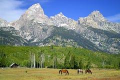 Pré de Teton Image libre de droits