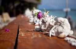 prętowi korale Fotografia Royalty Free