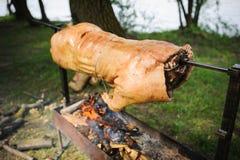 Prażak świnia Obraz Royalty Free