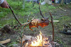 Prażaka kurczak nad ogniskiem Zdjęcie Stock