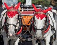 PRAAG, TSJECHISCHE REPUBLIC/EUROPE - 24 SEPTEMBER: Paarden in Oud Royalty-vrije Stock Fotografie