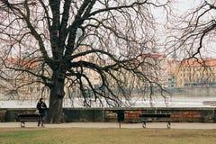 Praag, Tsjechische Republiek - 04 02 2013: Architectuur, gebouwen en oriëntatiepunt Weergeven van de straten van Praha stock afbeelding