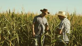 Praca jako biznesmen w rolnictwie rolnik i agronom sprawdzamy kwiatonośnych śródpolnych i kukurydzanych cobs Poj?cie zbiory wideo
