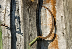 praca ogrodowa Zdjęcia Stock