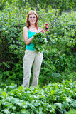 praca ogrodowa kobieta zbiera rzodkwi żniwo Zdjęcia Stock
