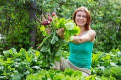 praca ogrodowa kobieta zbiera rzodkwi żniwo Obraz Royalty Free