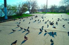 Taganrog, pigeon, seaside Park, children`s fun, feeding pigeons royalty free stock photos