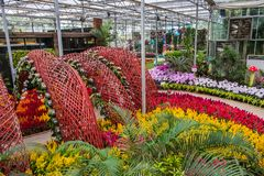 Prachinburi,泰国January11,2018:在Dasada画廊的美好的花和植物显示 免版税库存图片