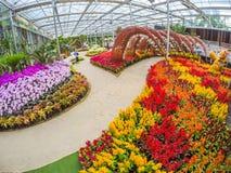 Prachinburi, Thailand-January11,2018: Mooie bloem en installatievertoningen bij Dasada-Galerij royalty-vrije stock fotografie
