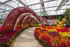 Prachinburi, Thailand-January11,2018: Schöne Blumen- und Betriebsanzeigen an Dasada-Galerie lizenzfreies stockbild
