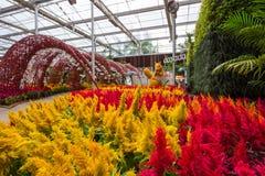 Prachinburi, Thailand-January11,2018: Schöne Blumen- und Betriebsanzeigen an Dasada-Galerie lizenzfreie stockfotos