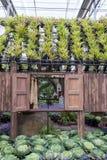 Prachinburi, Thailand-January11,2018: Schöne Blumen- und Betriebsanzeigen an Dasada-Galerie stockfotografie