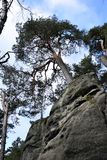 Sandstone Cliffs in Bohemian Paradise - The Prachov Rocks - Tree on Top royalty free stock images