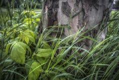 Pracht in het Gras stock fotografie