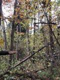 Prachtig bos in de herfst royalty-vrije stock afbeelding