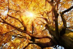 Prachtig de herfstlandschap Royalty-vrije Stock Foto's