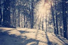 Prachtig de winterlandschap Stock Foto's