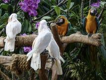 Prachtig fotografie van de de levensstijldierentuin van vogels de natuurlijke dieren in Singapore Royalty-vrije Stock Afbeeldingen