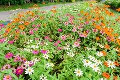 Prachtig Gebied met bloemen in verschillende kleuren Royalty-vrije Stock Foto