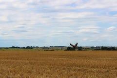 Prachtig Landschap De adelaar en de grote gele gebieden van tarwe na oogst en de sombere hemel op de achtergrond royalty-vrije stock afbeelding