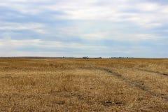 Prachtig Landschap De adelaar en de grote gele gebieden van tarwe na oogst en de sombere hemel op de achtergrond stock afbeelding