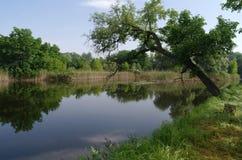 Prachtig landschap met groene bomen en de rivier Stock Afbeelding