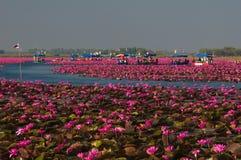 Prachtig landschap van roze waterlily bij het meer Royalty-vrije Stock Afbeeldingen