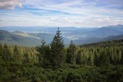 Prachtig panorama van de bergen van de Karpaten, de Oekraïne Altijdgroene bosheuvels Naaldbos stock afbeeldingen