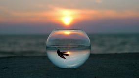 Prachtig scène rond gemaakt aquarium die zich op de mooie strandvlotter weinig vis bevinden weerspiegelde hemel en zeegezicht bij stock video