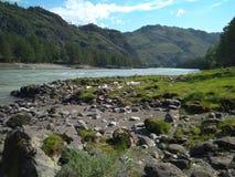 Prachtig schilderachtig landschap van de Altai-bergen op de banken van de Katun-rivier in het seizoen van de de zomertoerist in d stock foto's