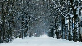 Prachtig sneeuw behandelde weg stock video