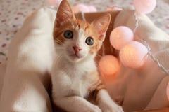 Prachtig weinig kat het stellen voor de camera voor verscheidene aardige schoten royalty-vrije stock afbeeldingen