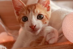 Prachtig weinig kat het stellen voor de camera voor verscheidene aardige schoten stock fotografie