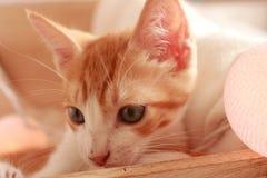 Prachtig weinig kat het stellen voor de camera voor verscheidene aardige schoten royalty-vrije stock foto