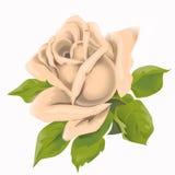 Prachtige bloem Royalty-vrije Stock Fotografie