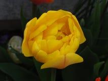 Prachtige bloem met een gele levendige kleur Front View Stock Foto