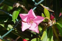 Prachtige bloem met een roze levendige kleur - vooraanzicht Royalty-vrije Stock Foto