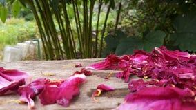 Prachtige bloemblaadjes royalty-vrije stock afbeelding
