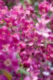 Prachtige bloemen Royalty-vrije Stock Foto's