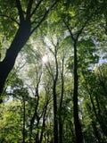 Prachtige bos en zon dat onderbrekingen door de takken stock foto