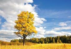 Prachtige de herfstzon en gele boom Royalty-vrije Stock Afbeelding