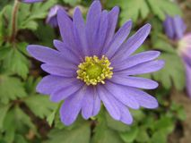 Prachtige de lentebloem Royalty-vrije Stock Fotografie