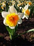 Prachtige de lentebloemen stock foto's