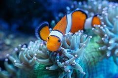 Prachtige en mooie onderwaterwereld met koralen en tropica Stock Foto