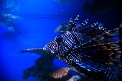 Prachtige en mooie onderwaterwereld met koralen en tropica Stock Foto's