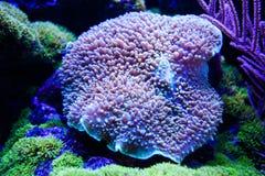 Prachtige en mooie onderwaterwereld met koralen en tropica Royalty-vrije Stock Afbeeldingen
